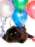 Gato persa negro con los globos del partido Imagen de archivo