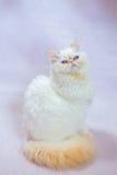 Gato persa um fundo claro Imagens de Stock