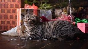 Gato perto da árvore e dos presentes de Natal video estoque