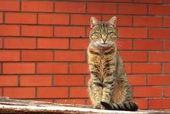 Gato perto de uma parede de tijolo vermelho Imagens de Stock