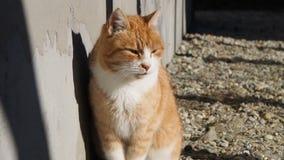 Gato perto do filme da casa video estoque