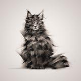 Gato pintado que senta-se em um fundo claro Imagens de Stock Royalty Free