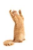 Gato plaful imagem de stock royalty free