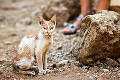 Gato pobre Imagem de Stock Royalty Free