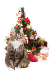 Gato por el árbol de navidad. Año de tigre Imagen de archivo libre de regalías
