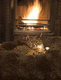 Gato por el fuego Imagen de archivo