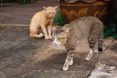 Gato precioso en al aire libre Foto de archivo libre de regalías