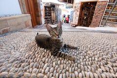 Gato preguiçoso Imagens de Stock Royalty Free