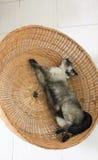 Gato preguiçoso Imagens de Stock
