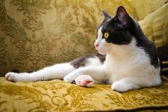 Gato preguiçoso Fotos de Stock Royalty Free
