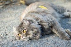Gato preguiçoso fotografia de stock