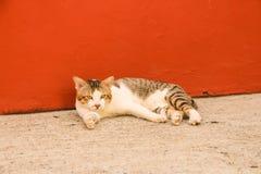 Gato preguiçoso Imagem de Stock Royalty Free
