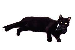 Gato preguiçoso com laço de curva Imagem de Stock