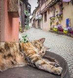Gato preguiçoso em França Imagem de Stock Royalty Free