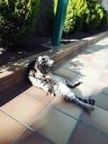 Gato preguiçoso em um dia ensolarado na terra em uma posição agradável Fotos de Stock