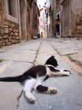 Gato preguiçoso que encontra-se na rua Foto de Stock