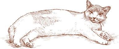Gato preguiçoso Fotos de Stock