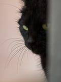 Gato preto Fotografia de Stock Royalty Free