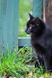 Gato preto Imagem de Stock