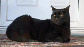 Gato preto video estoque
