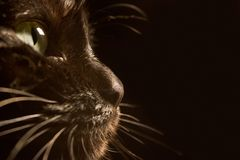 Gato preto Fotos de Stock Royalty Free