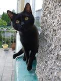 Gato preto Foto de Stock