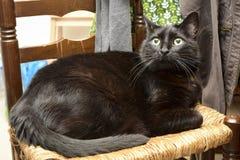 Gato preto Fotografia de Stock