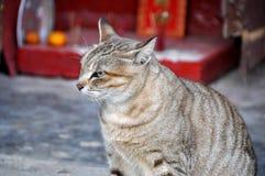 Gato preto & cinzento Imagem de Stock