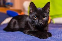 Gato preto bonito Imagem de Stock