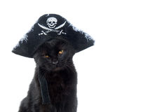 Gato preto com o chapéu do pirata para Halloween Fotos de Stock