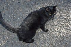 Gato preto com olhos alaranjados fotos de stock royalty free