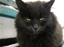 Gato preto com olhos amarelos Imagem de Stock