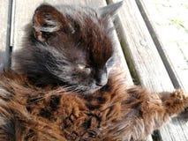 Gato preto com olhos verdes fotos de stock