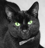Gato preto com olhos verdes imagens de stock