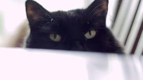 Gato preto com pálido - close up dos olhos verdes vídeos de arquivo