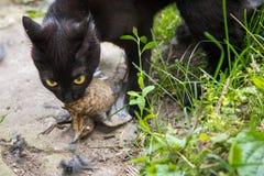 Gato preto com um pássaro na boca imagens de stock royalty free