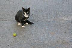 Gato preto com uma maçã verde imagem de stock