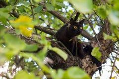 Gato preto curioso na árvore fotos de stock royalty free