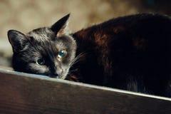 Gato preto da ninhada fotografia de stock royalty free