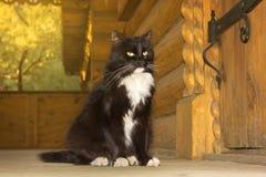 Gato preto de um conto de fadas Fotografia de Stock