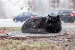 Gato preto desabrigado que dorme sob a neve fotos de stock royalty free