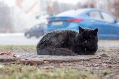 Gato preto desabrigado que dorme sob a neve foto de stock
