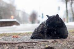 Gato preto desabrigado que dorme sob a neve fotos de stock