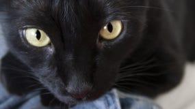 Gato preto dia do gato foreground imagens de stock royalty free