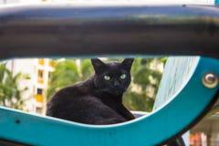 Gato preto disperso que olha a câmera Fotografia de Stock Royalty Free