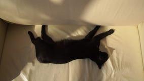 Gato preto dormindo em um sofá de couro bege em câmera lenta filme