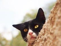 Gato preto e branco (16), fim-acima Fotografia de Stock Royalty Free