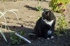 Gato preto e branco Imagens de Stock