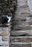 Gato preto e branco e as etapas Imagem de Stock Royalty Free