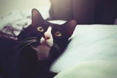 Gato preto e branco bonito imagem de stock